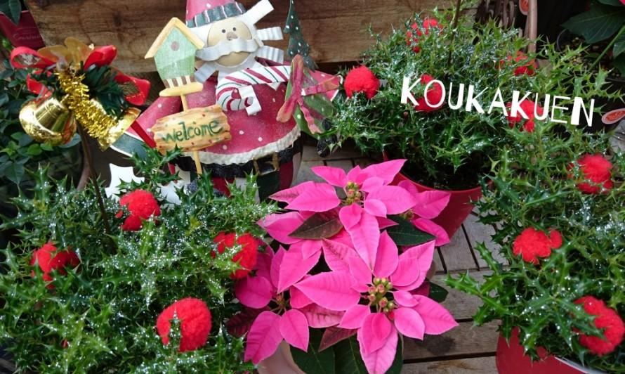 飯田市でお庭の事なら何でもお気軽にご相談。プリンセチア。
