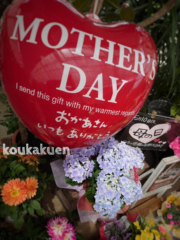 母の日。母の月。