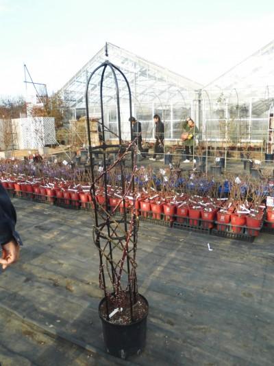 バラの誘引、バラの剪定、飯田市庭つくり、外構工事、ガーデン、ガーデニング
