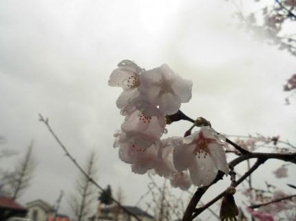 飯田市庭作りオススメの植木