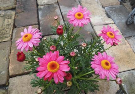 飯田市庭作りにオススメのお花