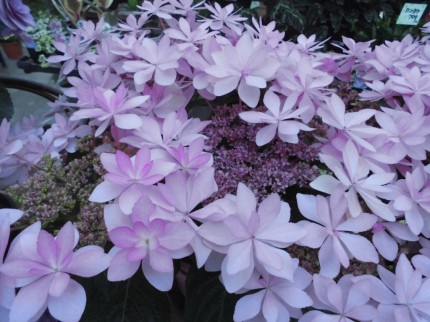 飯田市庭作りにオススメの鉢花
