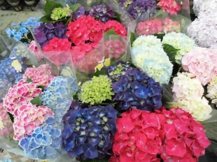 飯田市庭作りオススメのお花