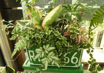 飯田市庭づくりおススメの植物