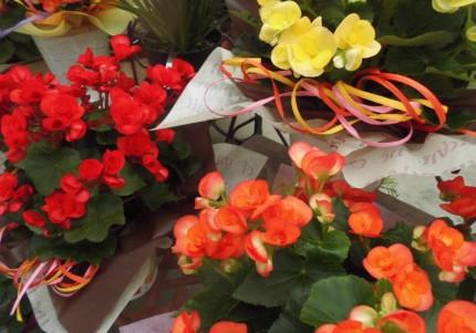 田市庭づくりおススメの植物