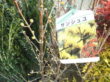 飯田市庭作りにおススメの植物