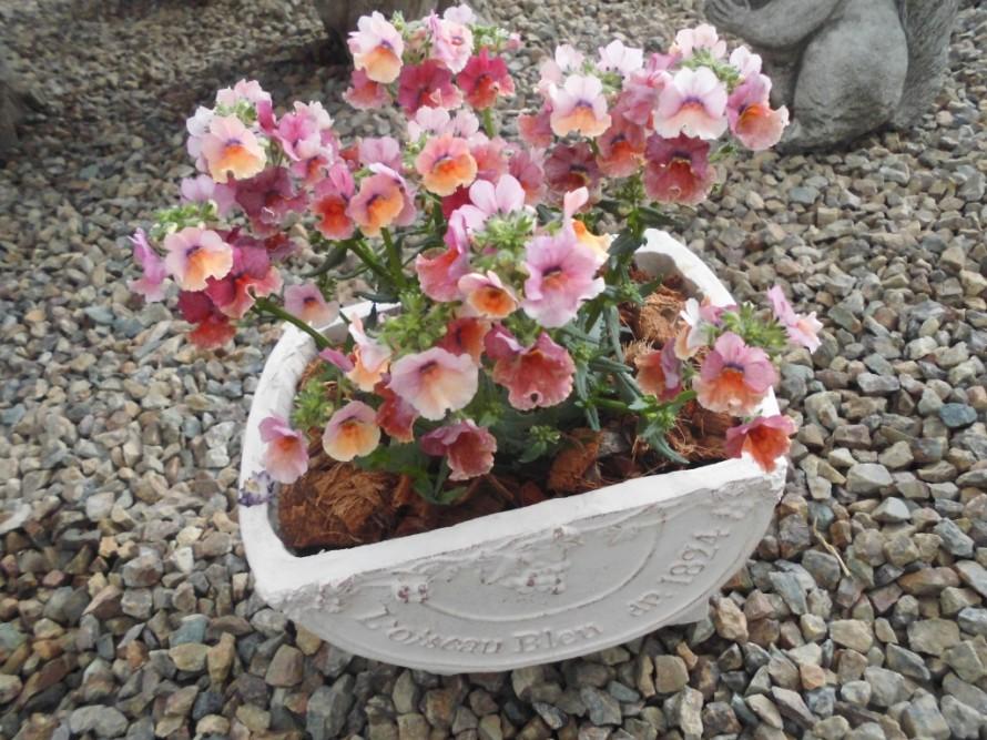 オシャレな鉢入荷!春のお花を寄せ植えしましょう、ガーデニング教室もやっています、飯田市庭つくり、外構工事、ガーデン、ガーデニング