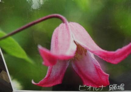 飯田市庭作りにおススメの植物たち、