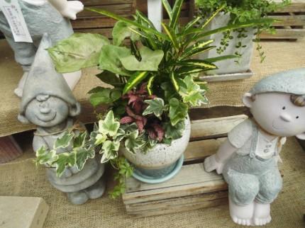 飯田市庭作りおススメの植物たち