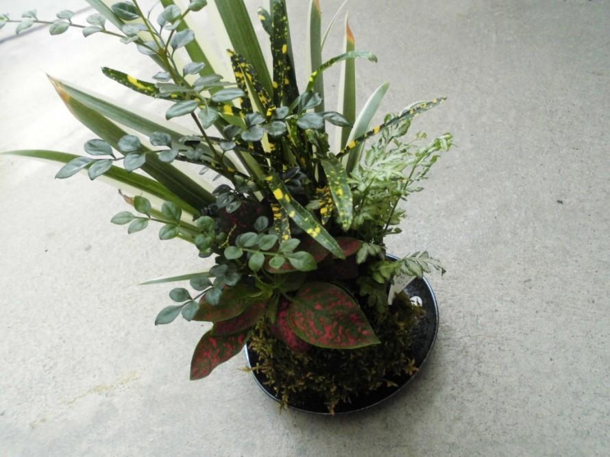 涼しげな苔玉、ちょっとしたプレゼントにもおすすめ苔玉、観葉植物を飾って涼しげに、お中元にもおすすめ苔玉、飯田市庭つくり、外構工事、ガーデン、ガーデニング
