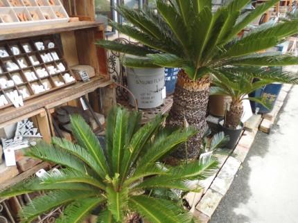 飯田市庭作りおススメの植物、
