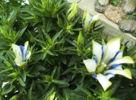 飯田市庭作りおススメの植物
