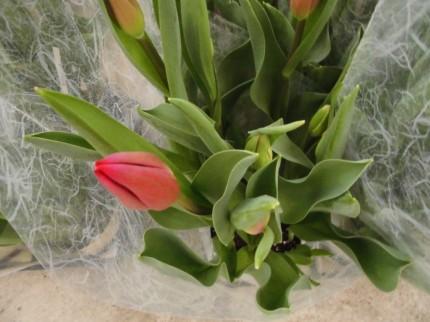 春の訪れをつげるチューリップで毎年お花を楽しむことができます ミニバラ マーガレット ディープローズ、春の訪れをつげるマーガレットでかごもりに入れても可愛い、飯田市でお庭のことなら何でもご相談ください