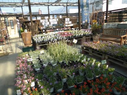 飯田市庭作りおススメの植物を取り扱うお店黄鶴園