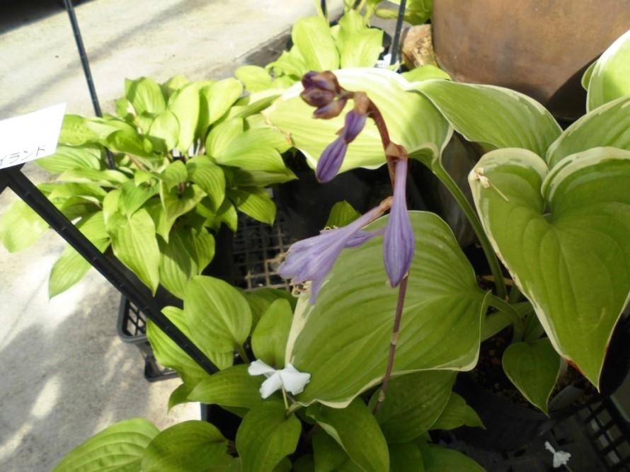 飯田氏庭作りおススメの植物を取り扱うお店こうかくえん
