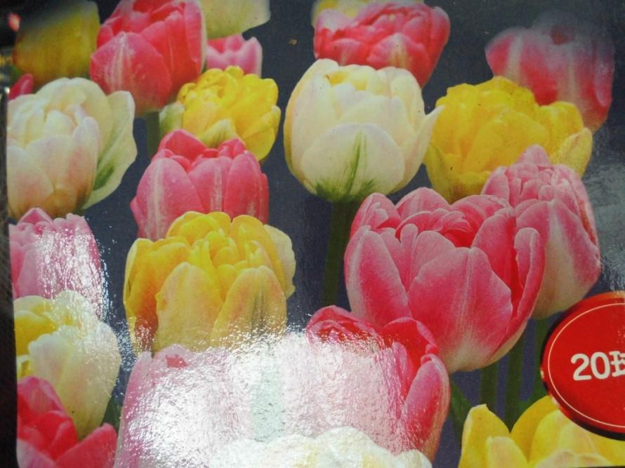 秋植え球根入荷してきてます 今の時期から植えて春に楽しめる チューリップ ストロベリーフィールズ チューリップ フルーツポンチ チューリップ ダブルアップミックス クロックス黄色絞りなど続々入荷中です 飯田市でお庭の事なら何でもお気軽にご相談ください