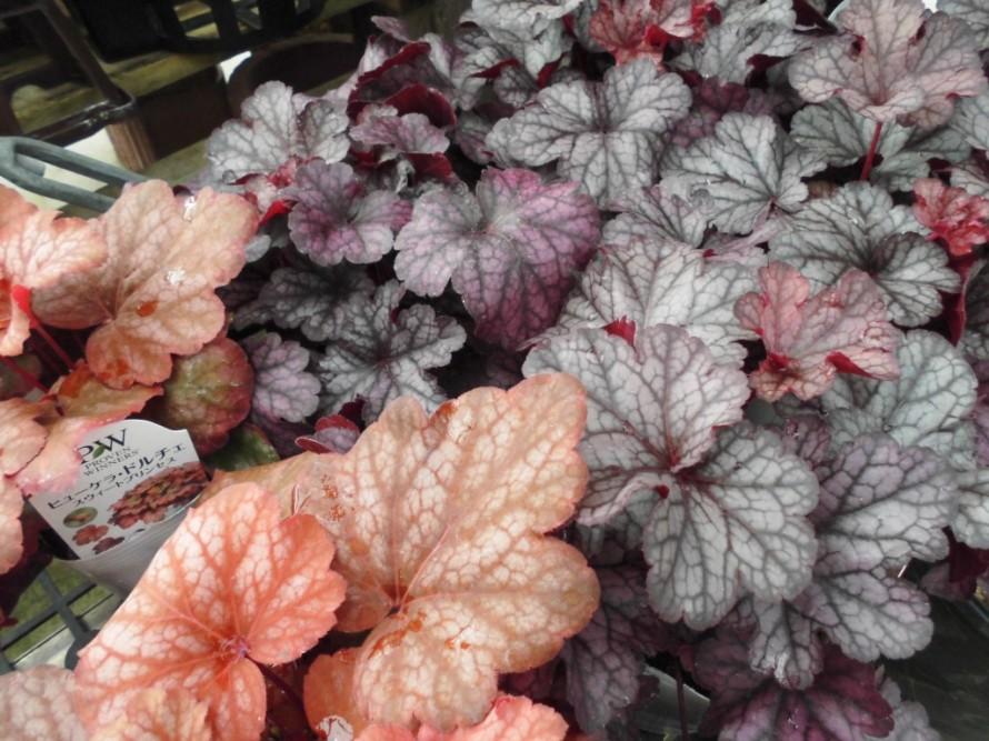 i飯田市で庭作りおススメの植物を取り扱うお店黄鶴園