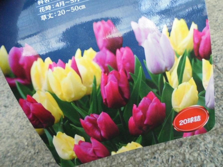 パンジービオラ続々入荷中です 秋から春まで長く楽しめる寒さに強いお花です パンジービオラと一緒に球根を植えるのもおすすめ 可愛らしいチューリップやスノードロップ入荷しております 飯田市でお庭の事なら何でもお気軽にご相談ください