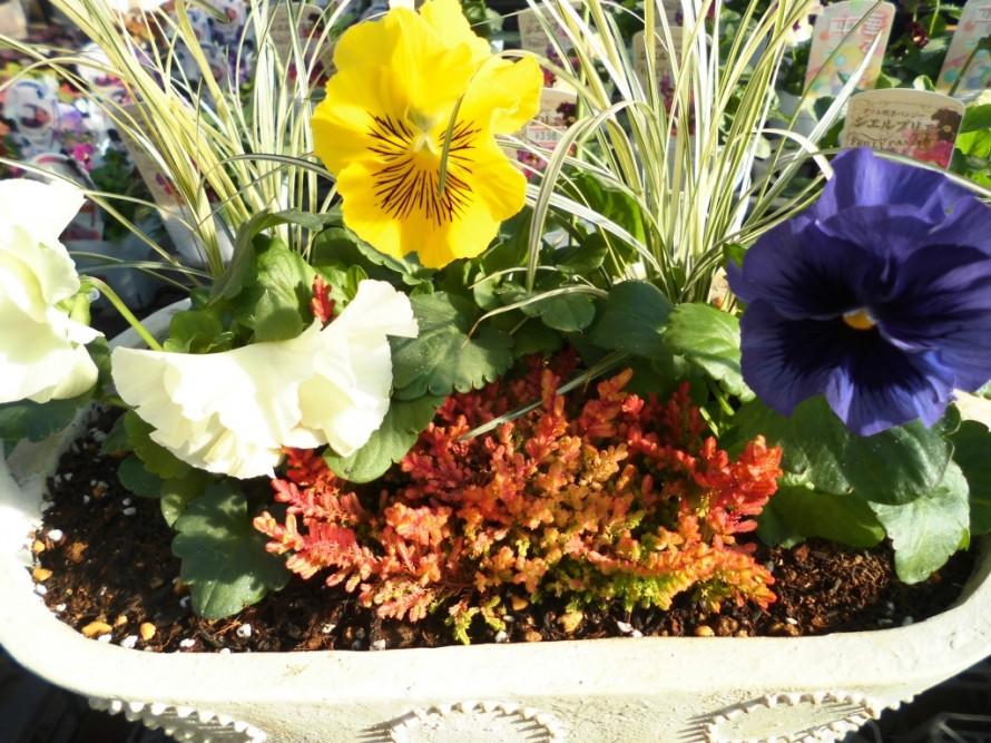 飯田市お庭作りおススメの植物を取り扱うお店黄鶴園