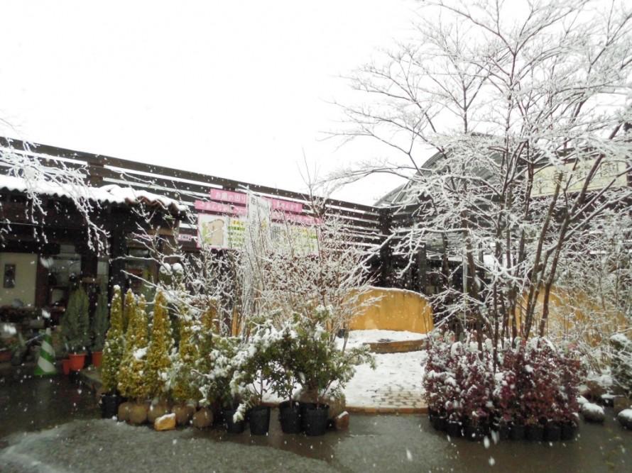 飯田市庭作りおススメの植物を取り扱う黄鶴
