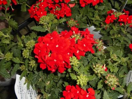 飯田市庭作りおススメの植物を取り扱う店黄鶴園