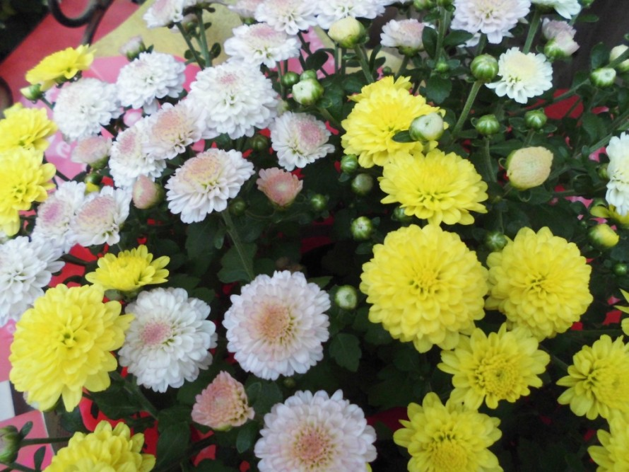 飯田市でお庭の事なら何でもお気軽にご相談。