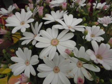飯田市下伊那お花を扱うお店こうかくえん