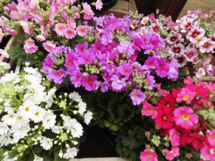 飯田下伊那のおはなや植物を取り扱うお店こうかくえん