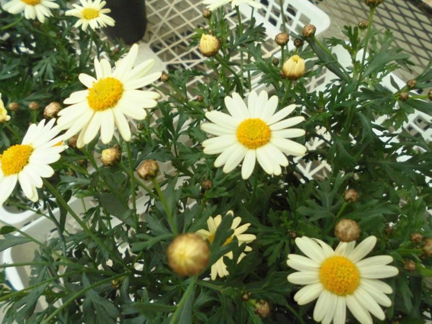 飯田下伊那お花植物を取り扱うお店こうかくえん