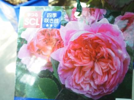飯田市下伊那お花植物を取り扱うお店こうかくえん
