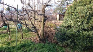 いらない植木の撤去