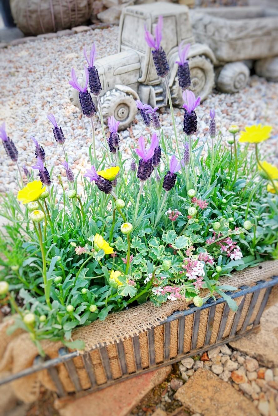 春の寄せ植え。アイアン