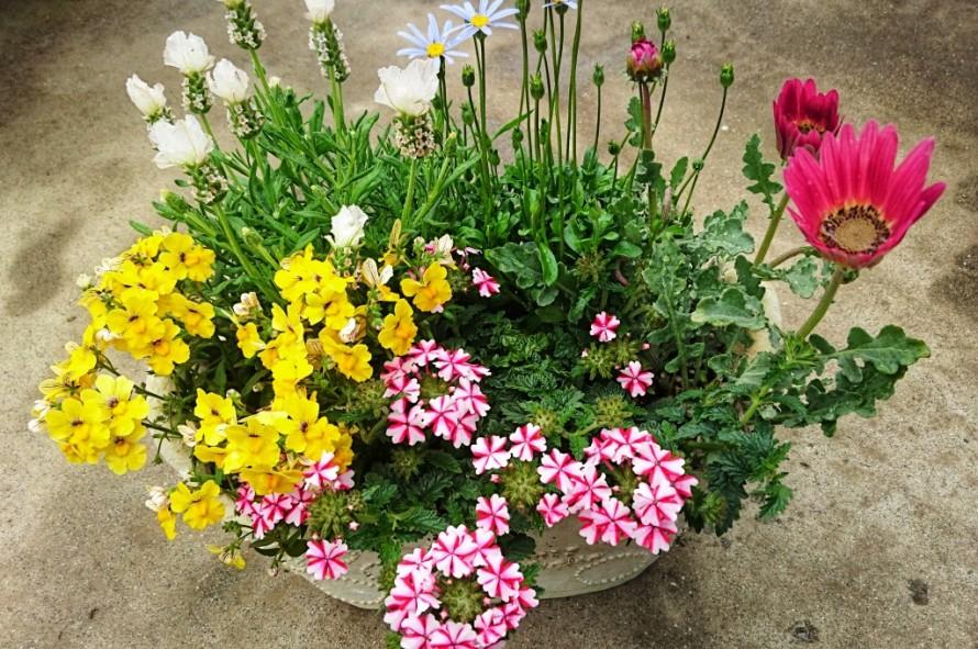 飯田市でお庭の事なら何でもお気軽にご相談。お花