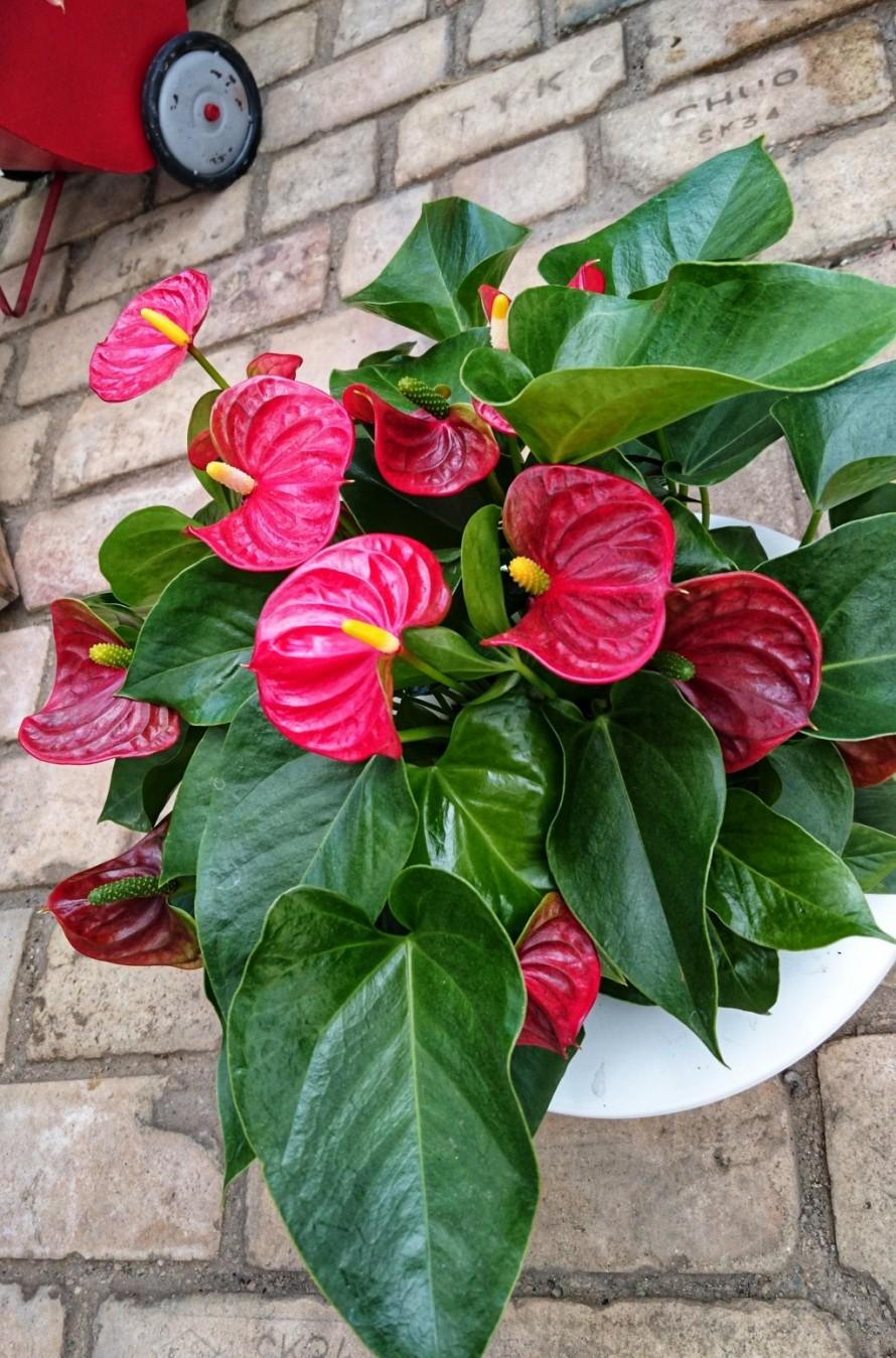 飯田市でお庭の事なら何でもお気軽にご相談。観葉植物。これからの時季おすすめ。