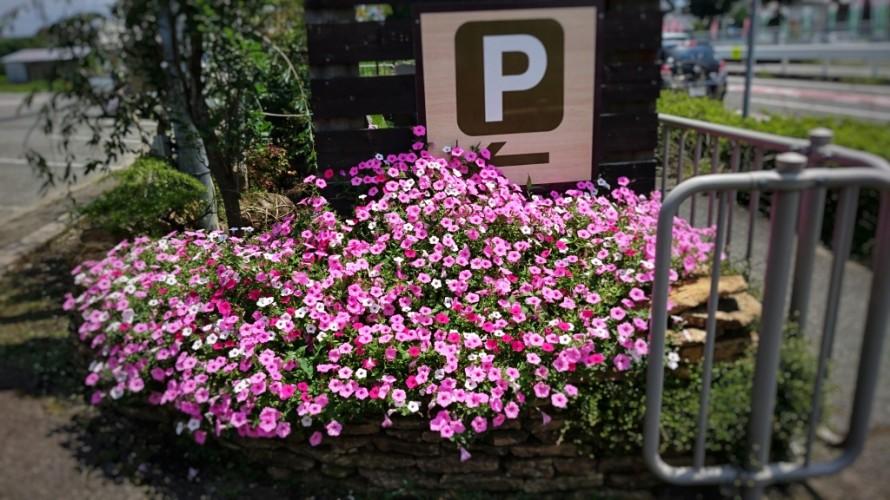 飯田市でお庭の事なら何でもお気軽にご相談。観葉植物。店舗入り口。花ざかり。