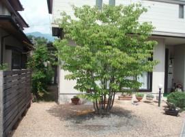 ヤマボウシ庭つくり、外構工事、ガーデン、ガーデニング