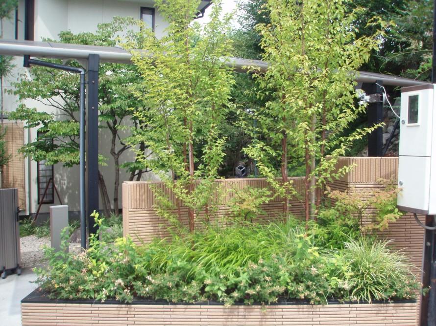 ヒメシャラ/庭づくり・外構工事・ガーデニングに最適な生垣になる植木。飯田下伊那に適している植木・樹木。撮影場所-飯田市庭のことなら(有)黄鶴園こうかくえんアップルロード店