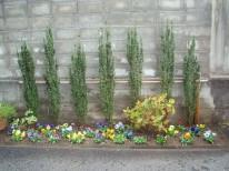 スカイペンシル/飯田市庭つくり、外構工事、ガーデン、ガーデニング