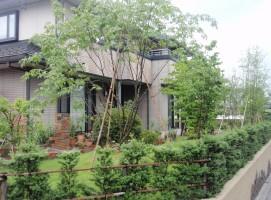アオダモ/飯田市庭つくり、外構工事、ガーデン、ガーデニング