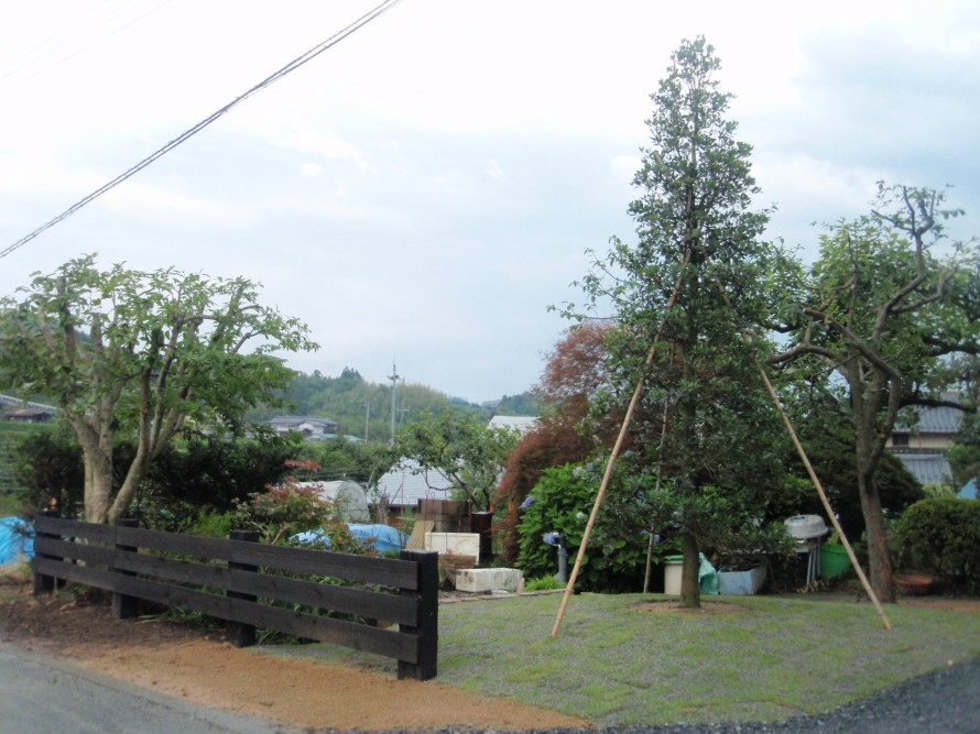 モッコク/飯田市庭つくり、外構工事、ガーデン、ガーデニング