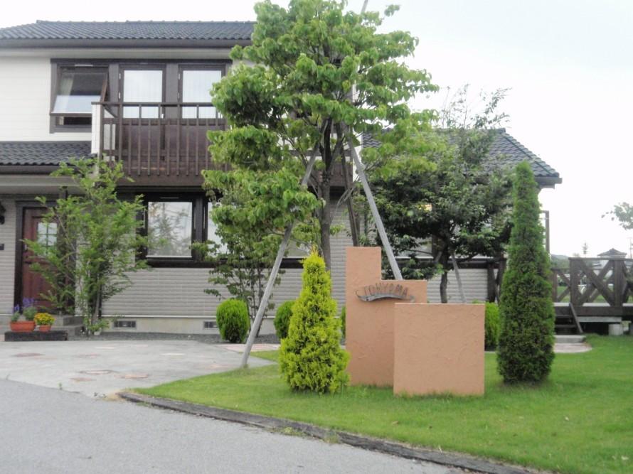 ハナミズキ/庭づくり・外構工事・ガーデニングに最適なシンボルツリー。飯田下伊那に適している植木・樹木。撮影場所-飯田市庭のことなら(有)黄鶴園こうかくえんアップルロード店