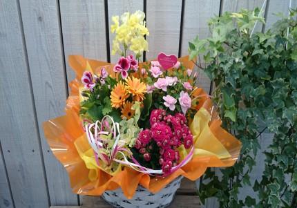 室内で楽しむ鉢花メイン
