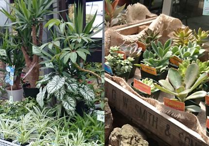観葉植物+多肉植物
