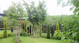 植木の伐採・抜根